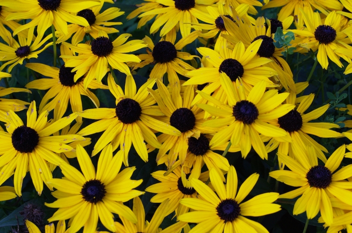 Yellow flowers - Septermber 2015